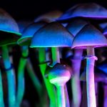 Shrooms' Effects: The Dangers of The Magic Mushrooms